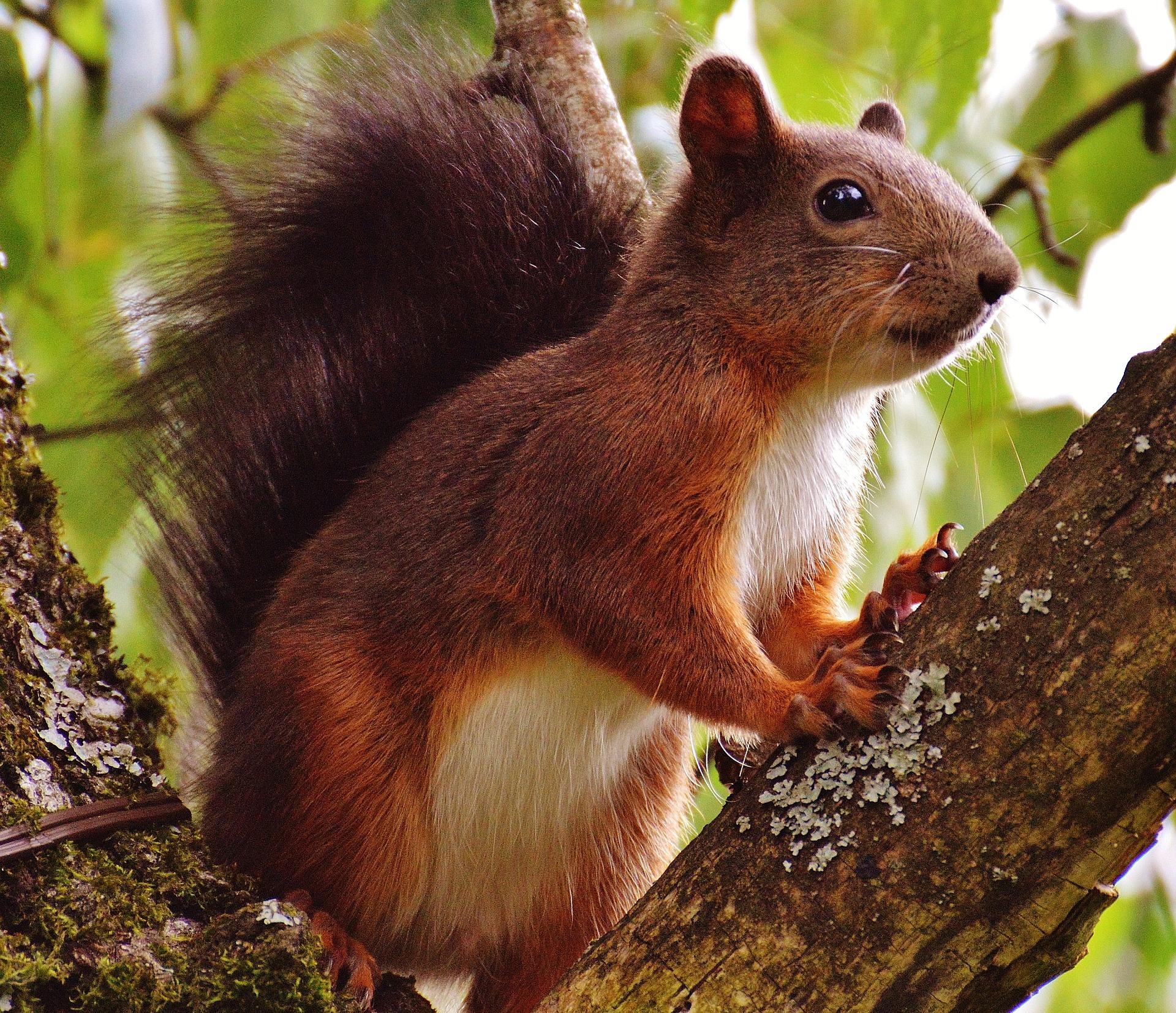Bild eines Eichhörnchens