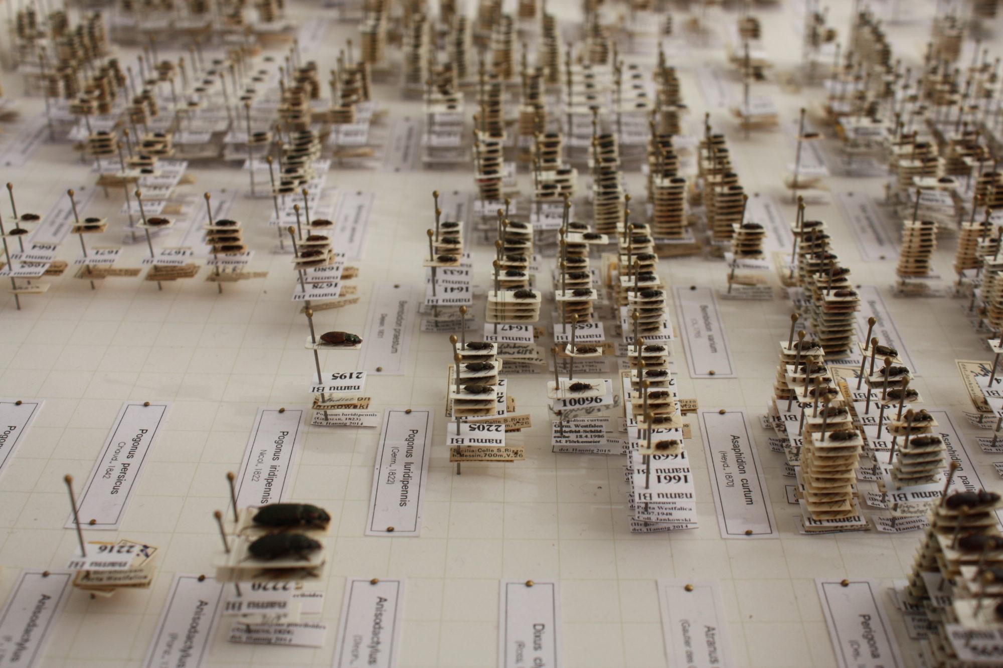 Käfersammlung