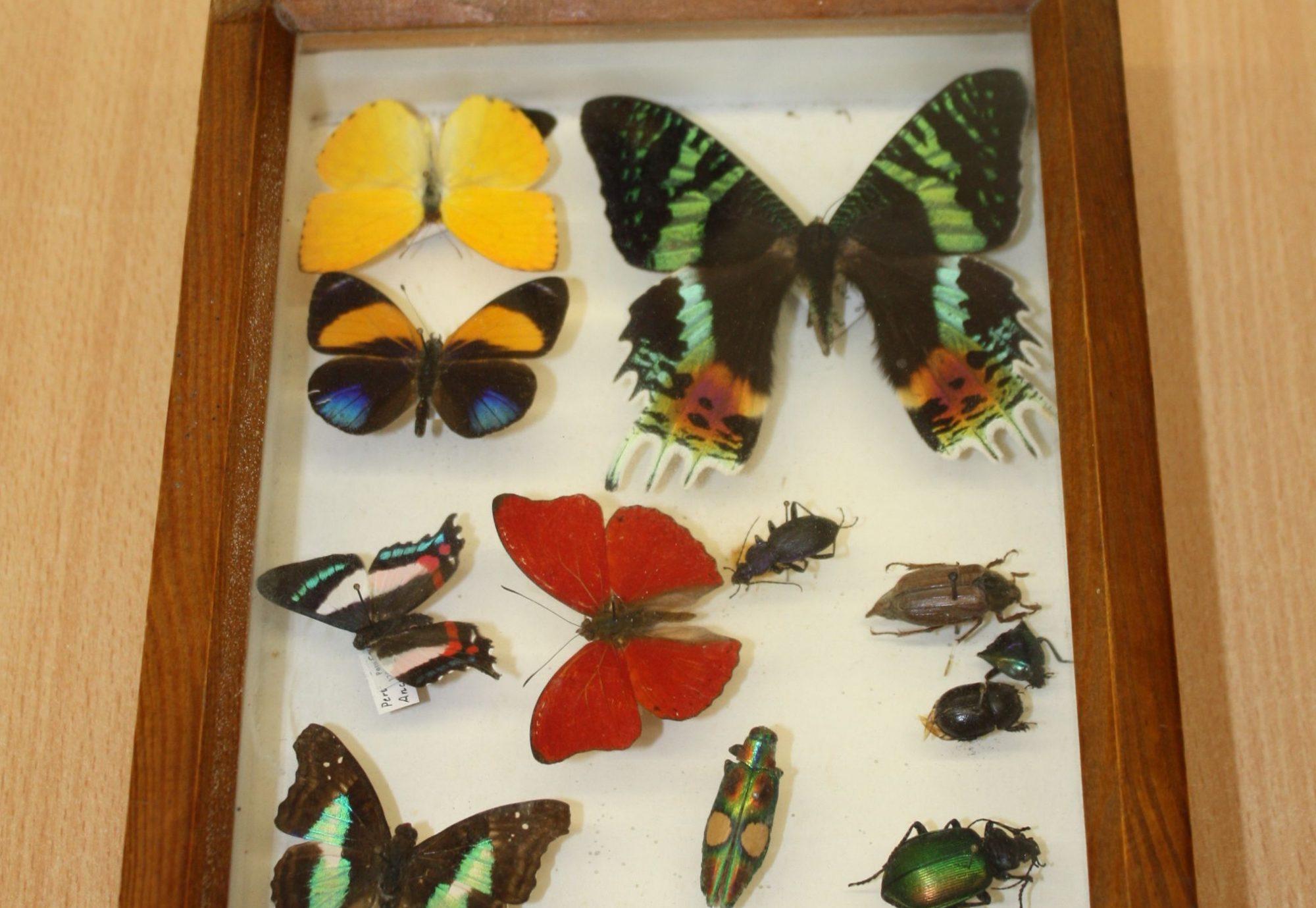 Schmetterlings Kasten