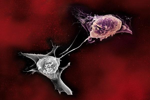namu_bielefeld_Stammzellen