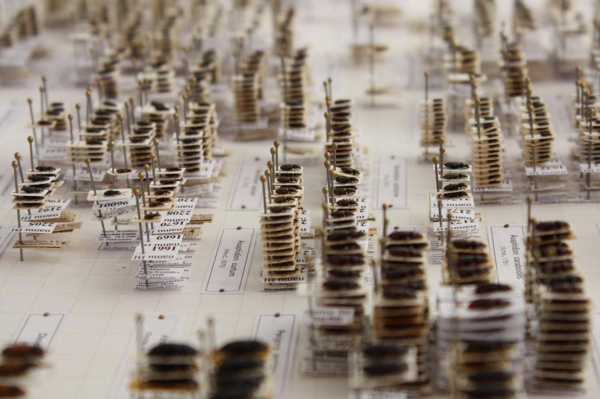Bild der Käfersammlung