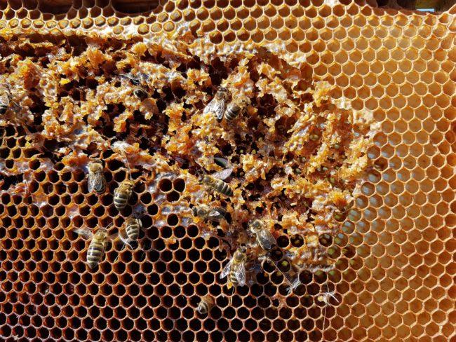 Bienenwaben-zufall